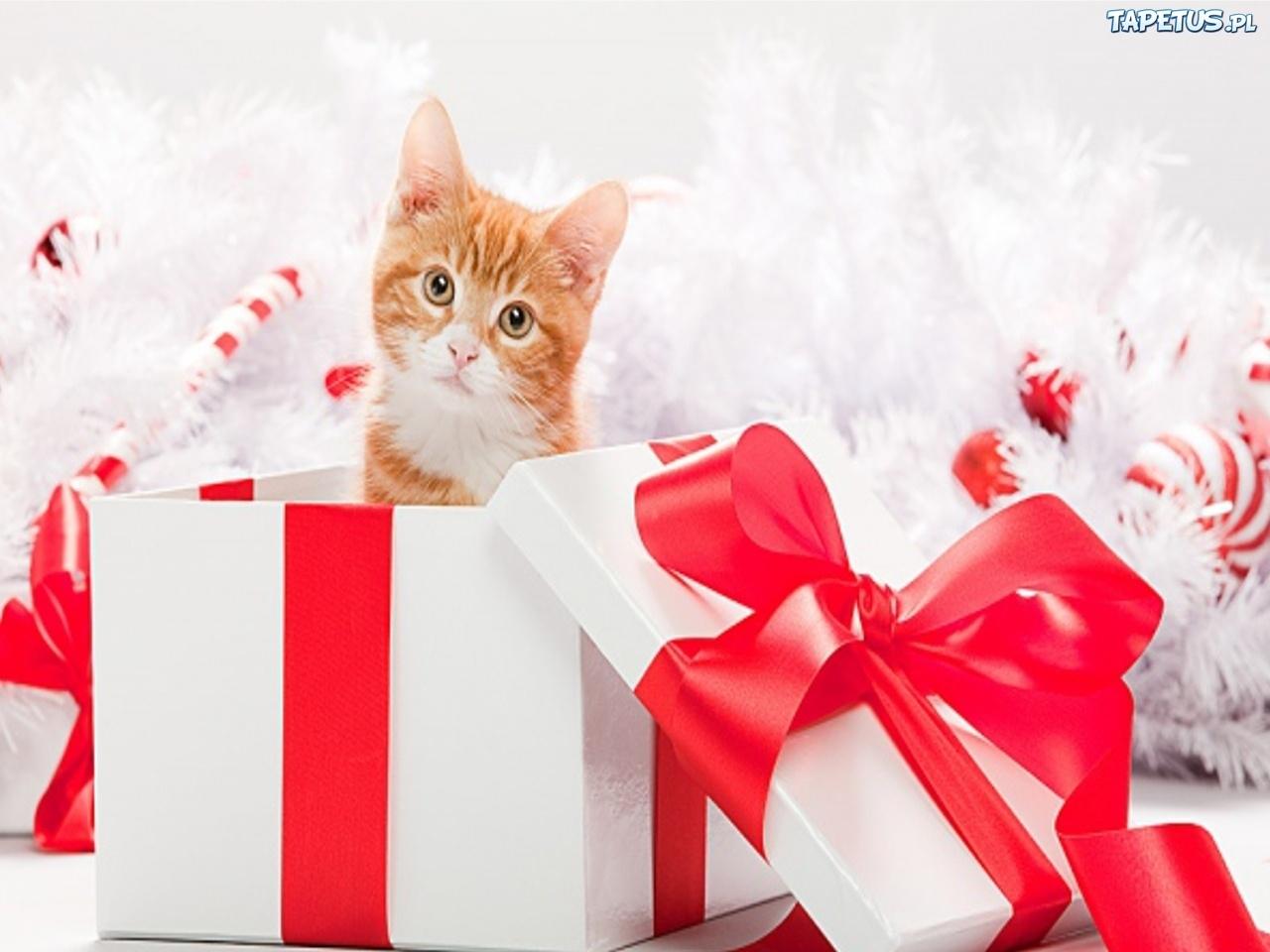 Картинки котята подарки