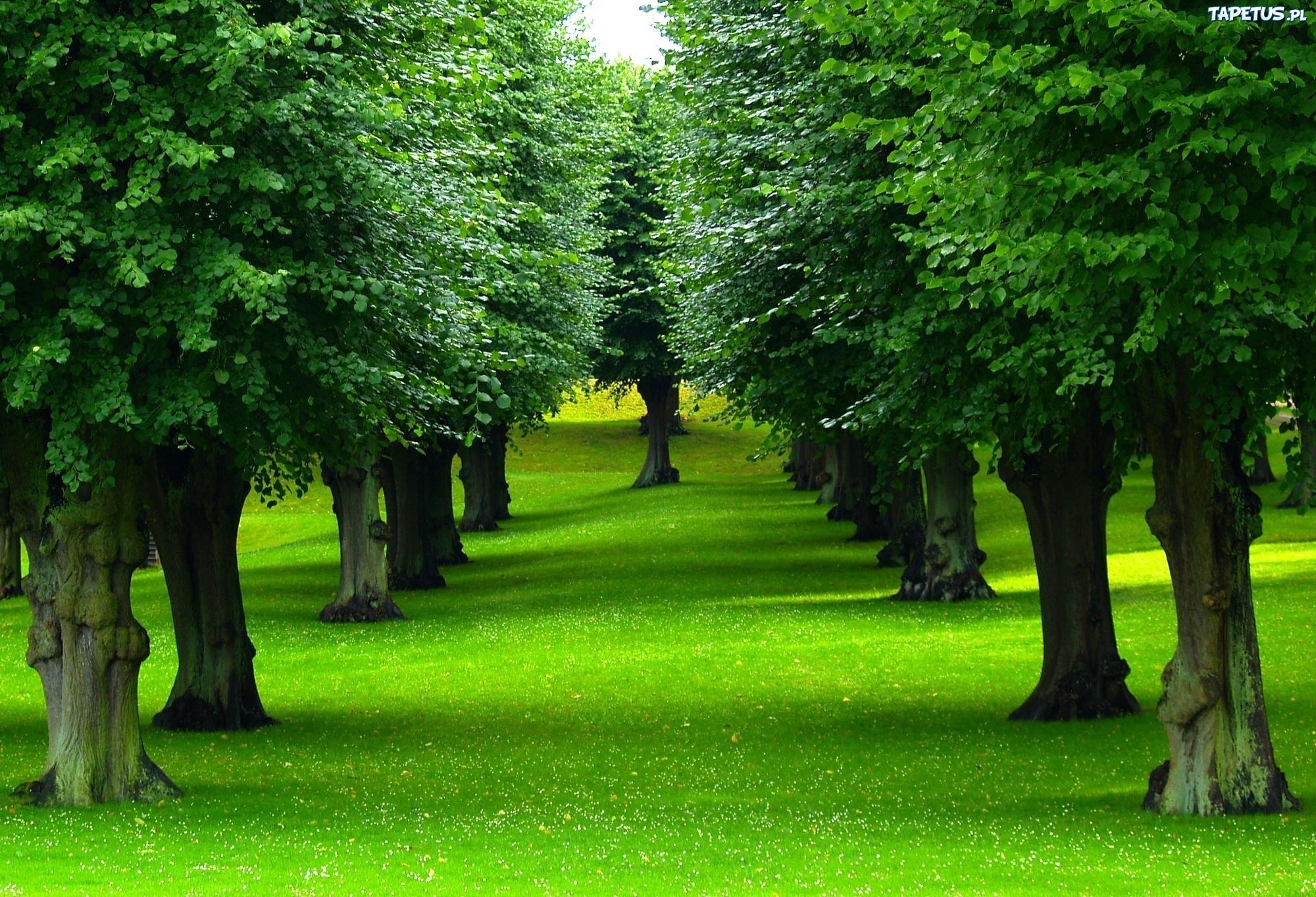 зелень лес деревья  № 1078752  скачать