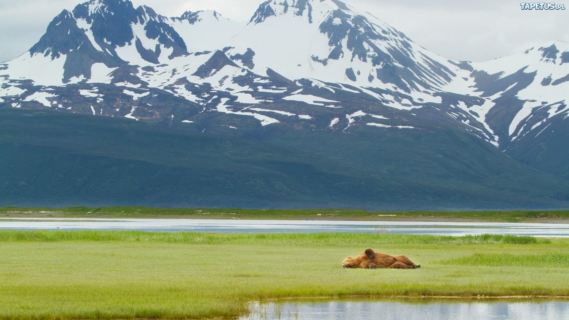 Alaskan Brown Bear Silhouetted Against Mount Katolinat, Alaska  № 1442458 бесплатно