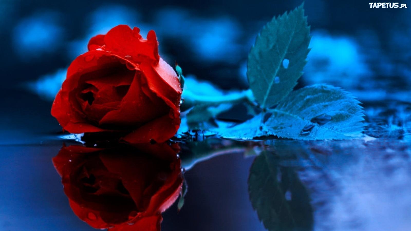www.tapetus.pl/obrazki/n/121276_roza-niebieskie-tlo.jpg