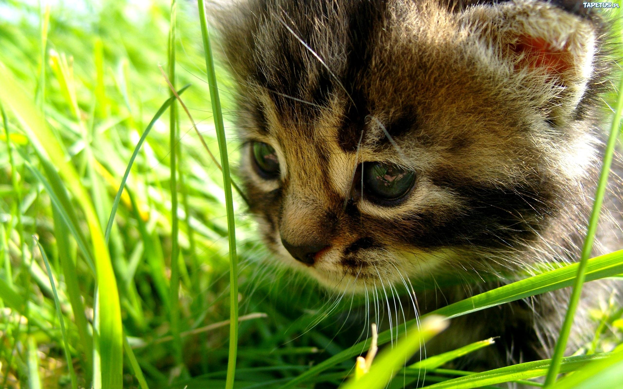 Котенок на траве  № 2959587  скачать