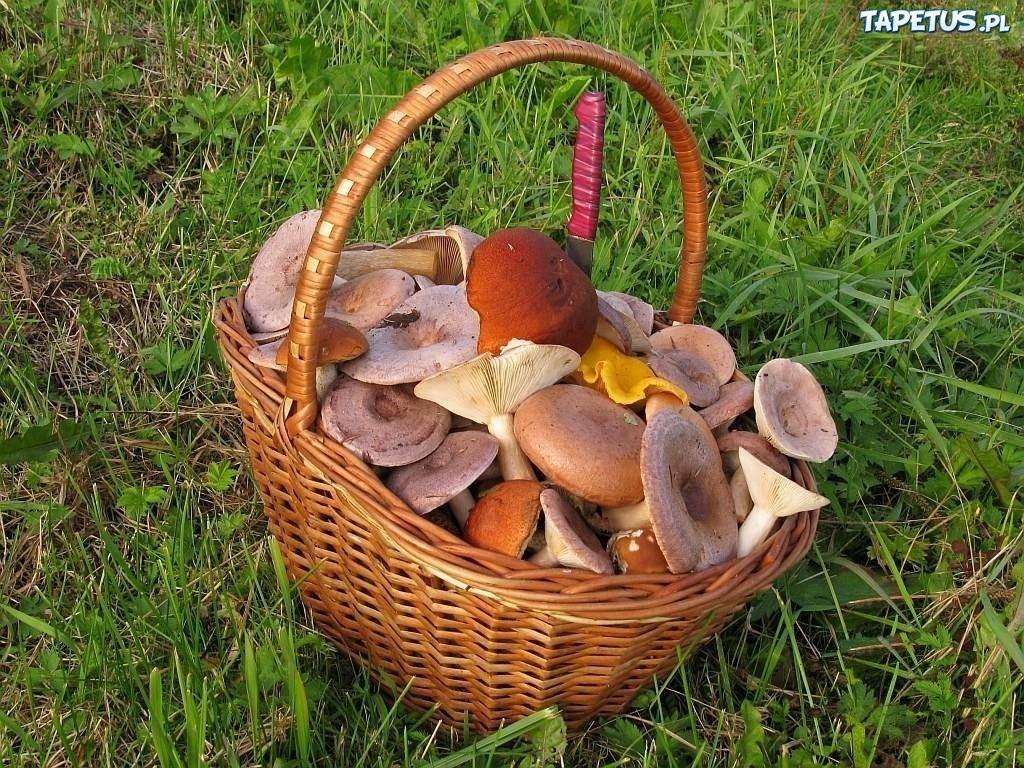 http://www.tapetus.pl/obrazki/n/129441_aka-kosz-pelen-grzybow.jpg