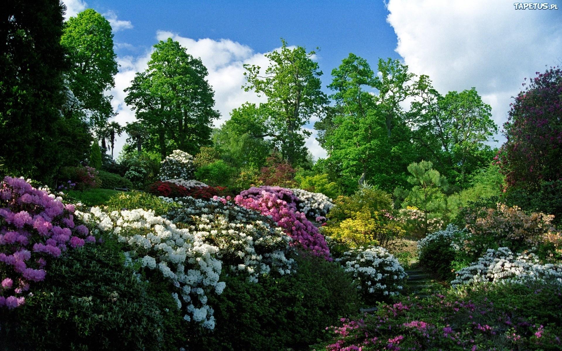 луг сад дворик трава  № 2691597 бесплатно