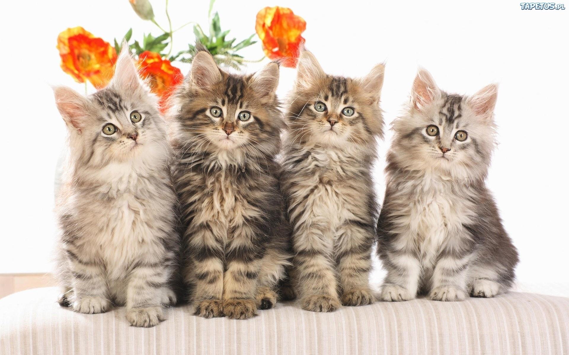 Cztery Młode Kotki