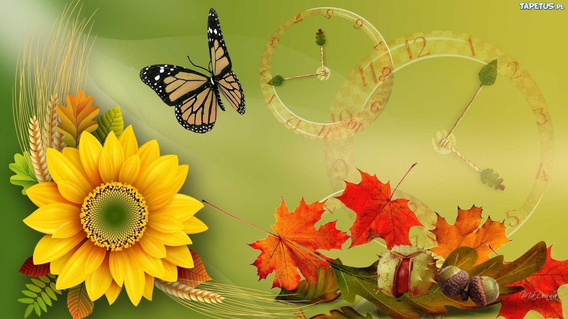 Słonecznik, Liście, Motyl, Jesień, Grafika