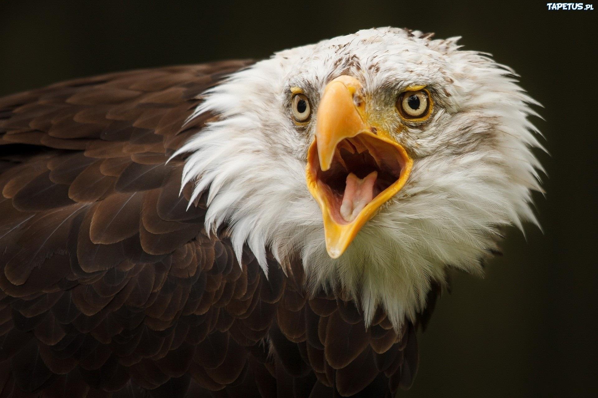 Фото белый орел