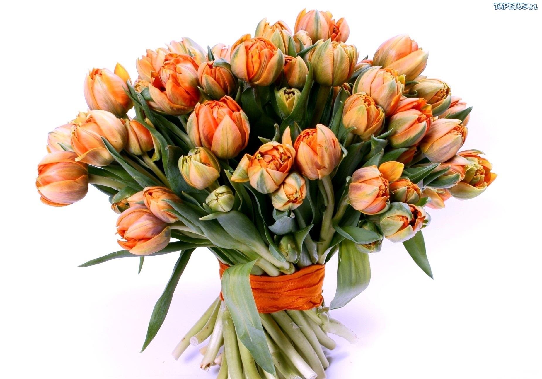[Obrazek: 146460_bukiet-tulipanow.jpg]