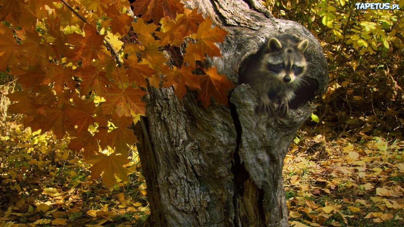 Дупло с листьями  № 2520870 загрузить