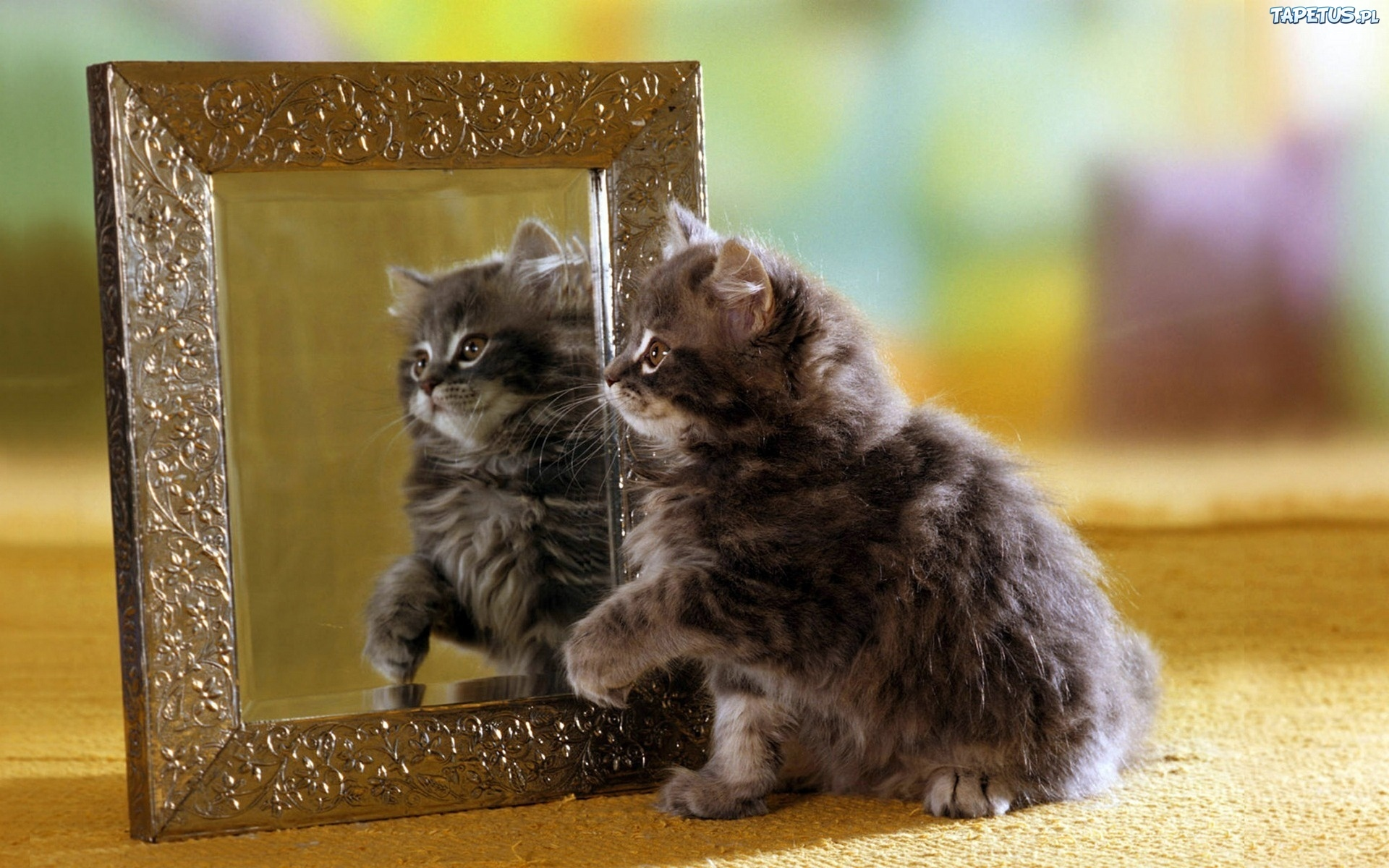 Кот с зеркалом  № 1689778 без смс
