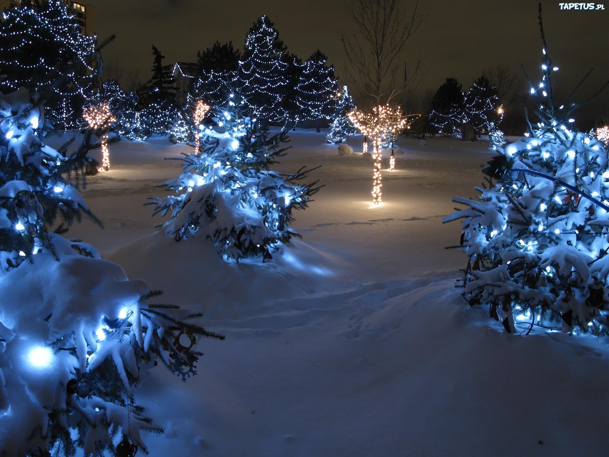 ель огни снег  № 3330360 бесплатно