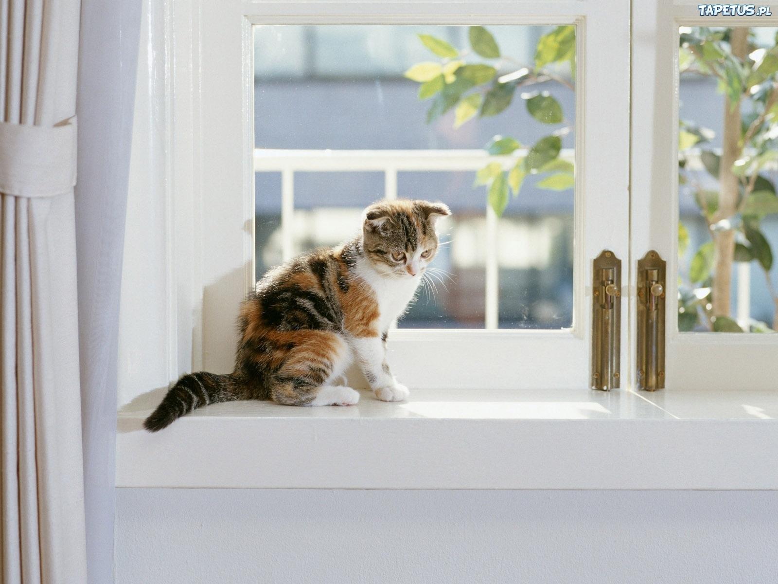 котята на окне kittens on the window  № 3063246 без смс