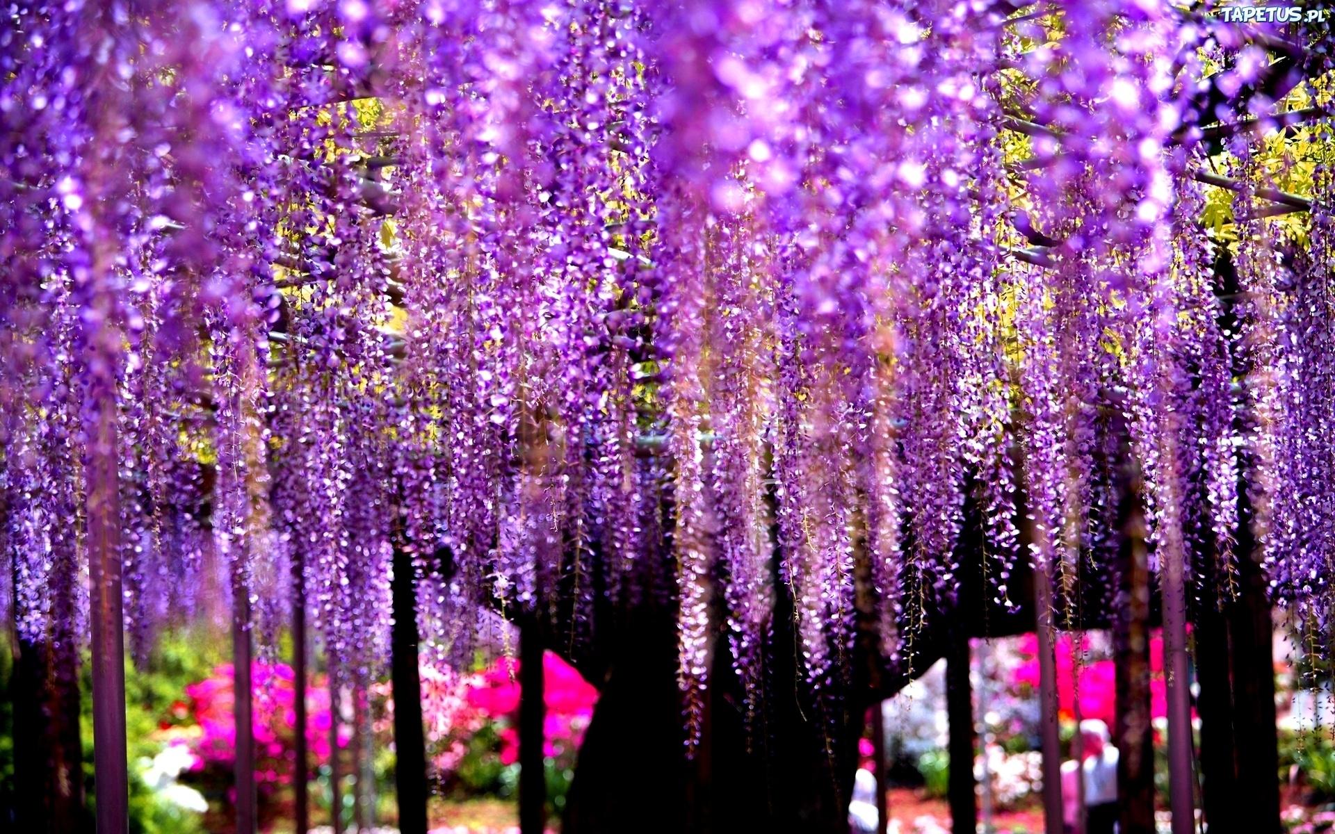 цветущие деревья во дворе  № 532112  скачать
