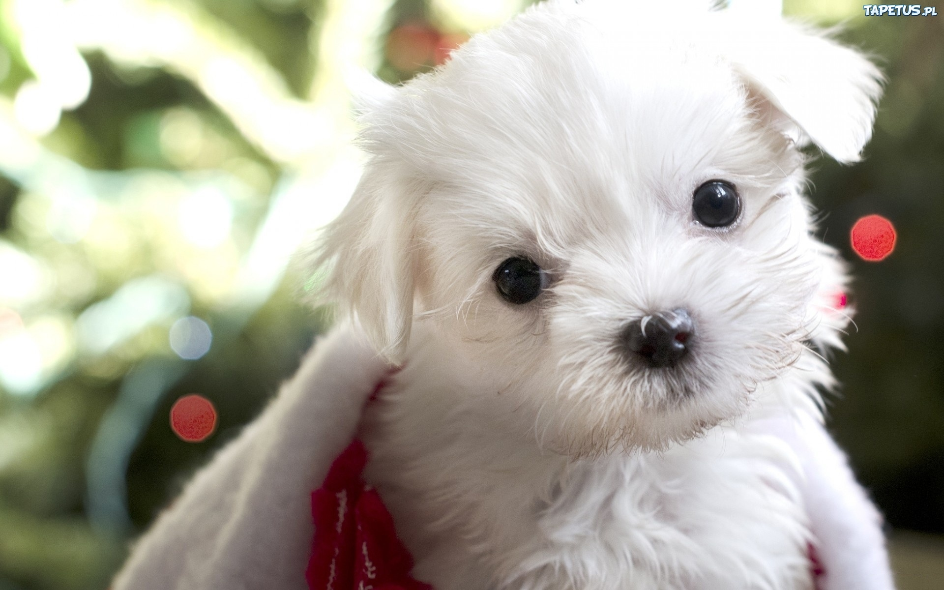 Pic Of Small White Dogs