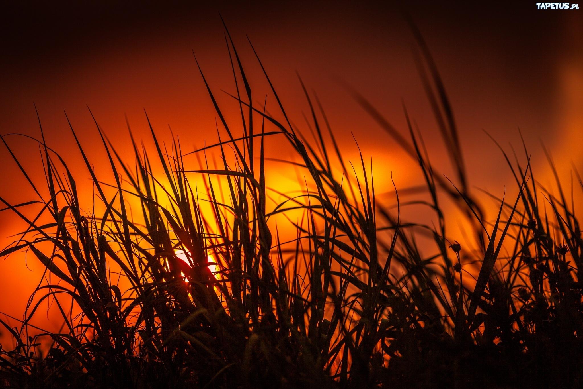 закат трава цветы озеро  № 1025319  скачать