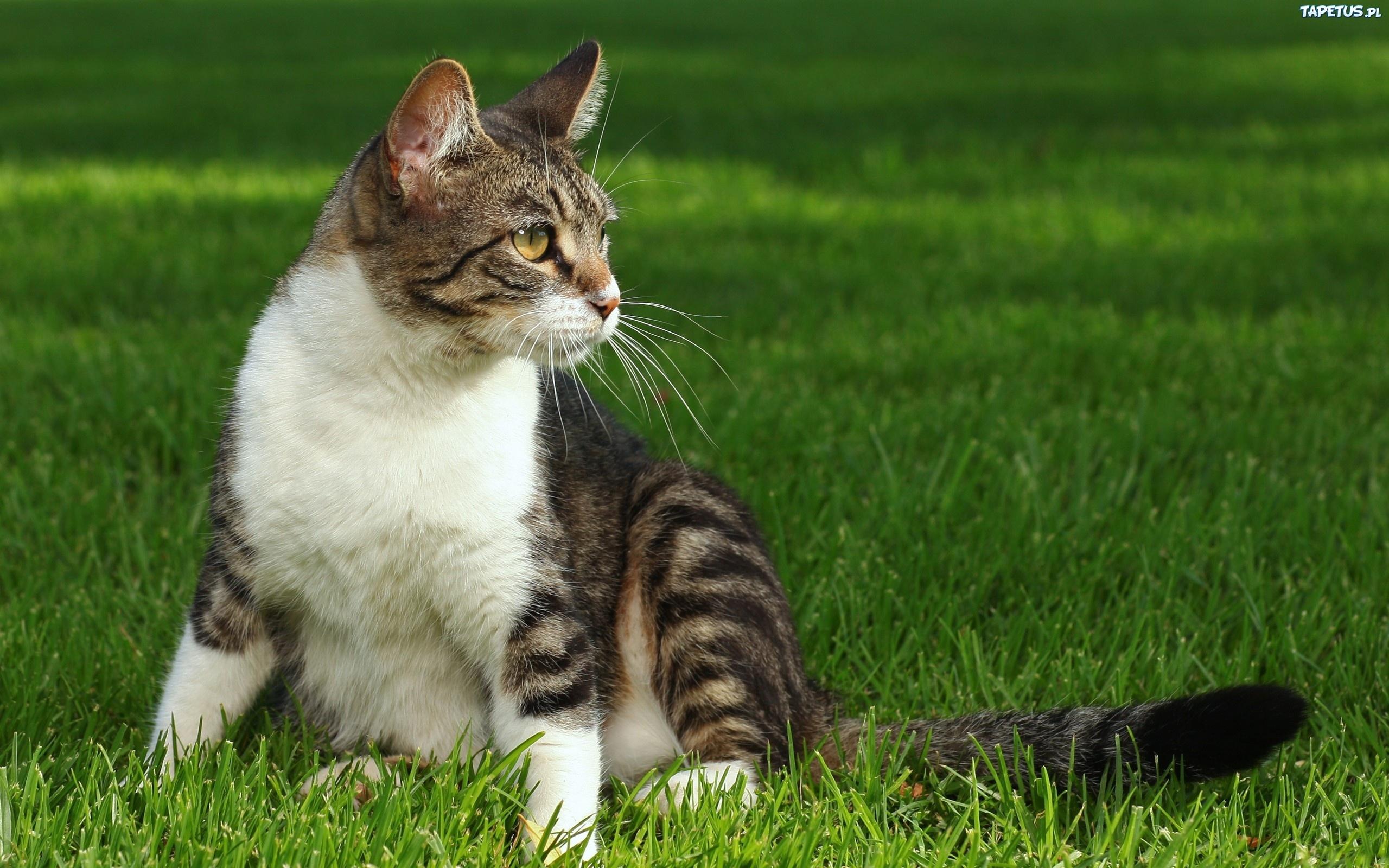 Котенок играющий с кошкой в траве  № 1994898 загрузить