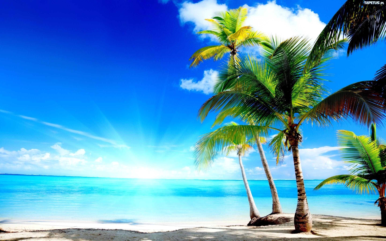 大海沙滩椰树摄影图_自然风景系列; 椰树 图片蓝天下海边椰树高清图片