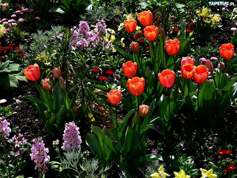 Клумба из тюльпанов своими руками на даче фото 71