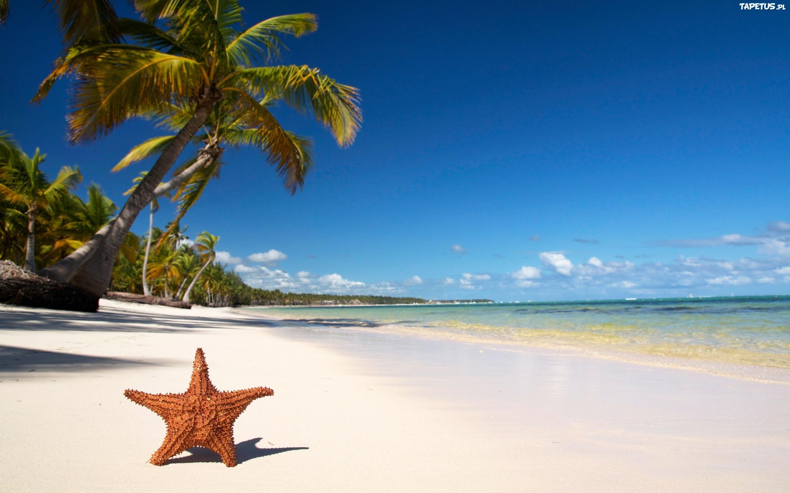 海滩 椰树 沙滩 热带 热带海滩 海岛 大海 海洋 蓝天 白