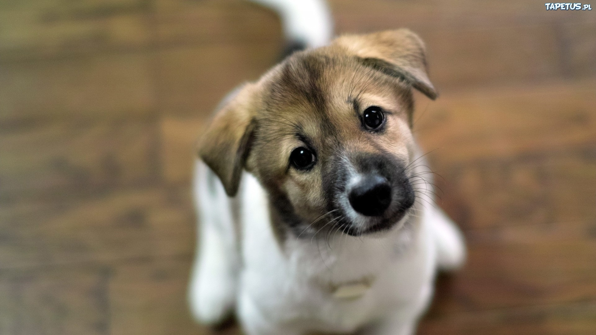download wallpaper dog little - photo #39