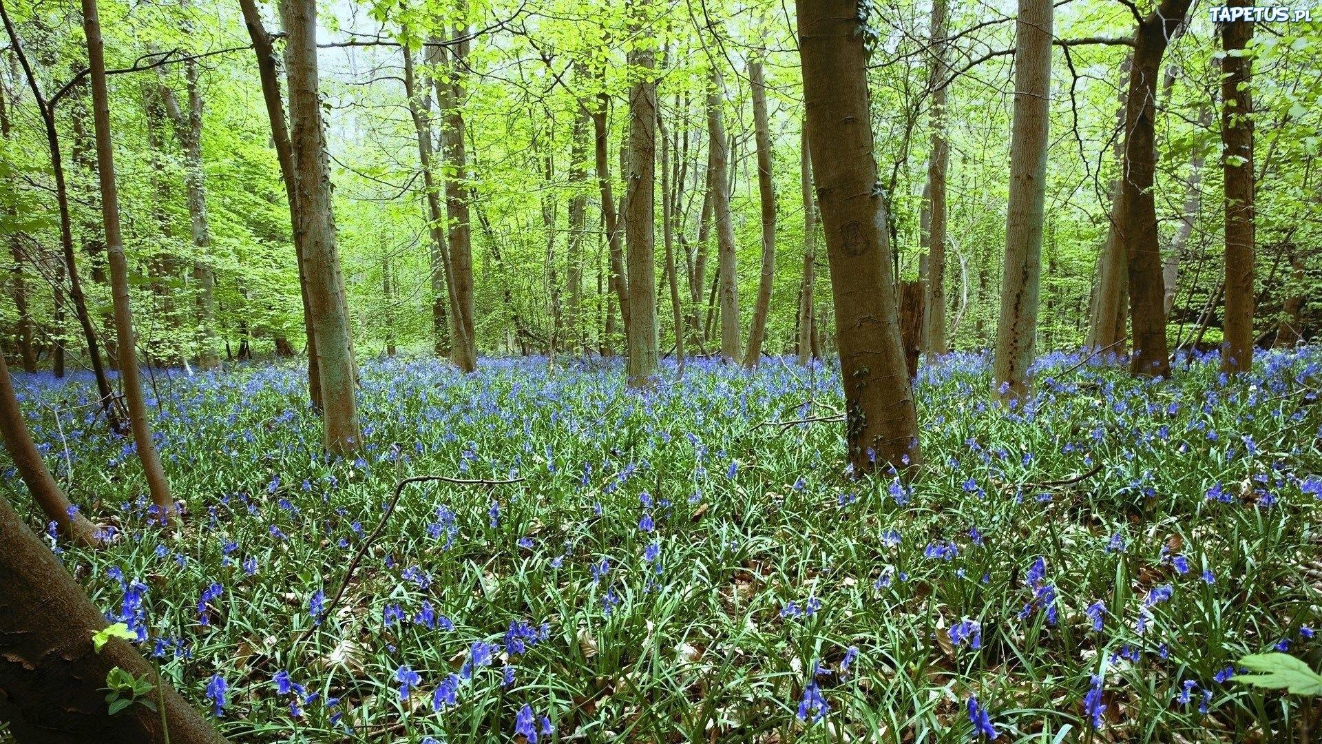 весной в лесу  № 113857 без смс