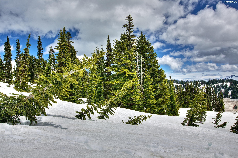 природа деревья ели зима снег небо  № 2803185 бесплатно