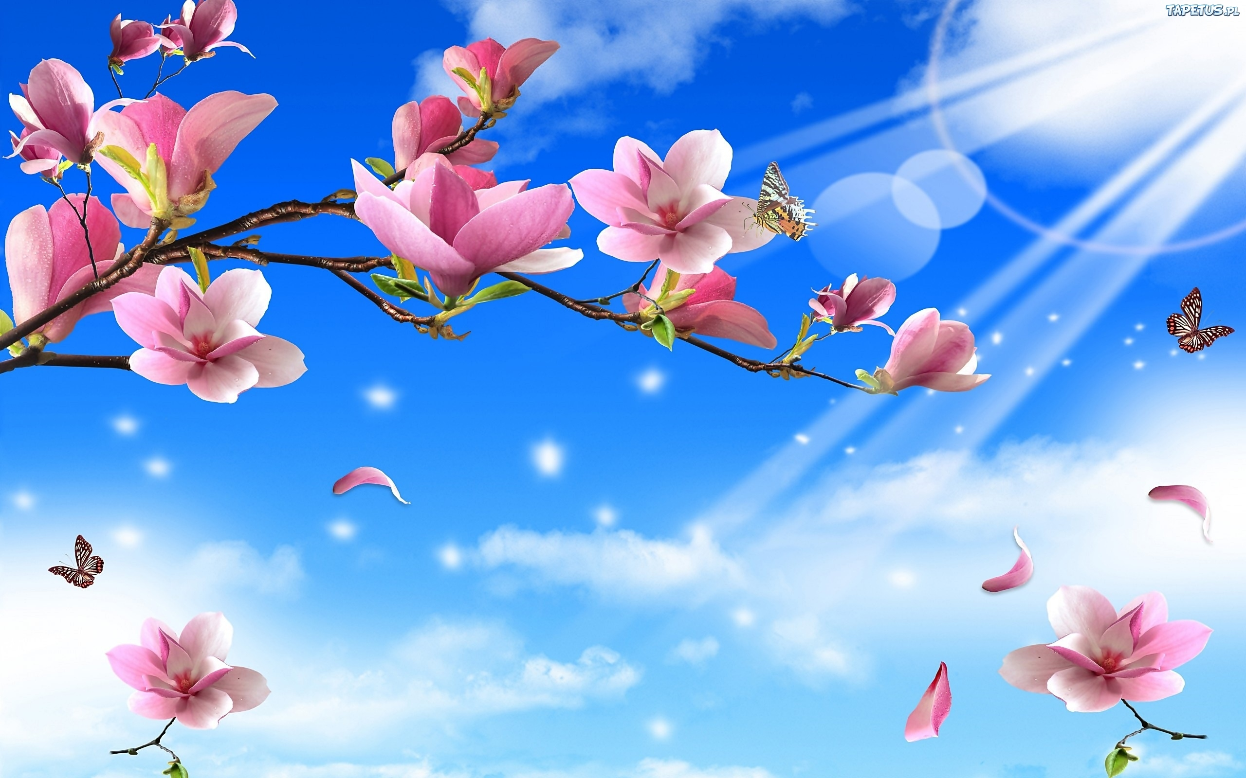Znalezione obrazy dla zapytania kwiat magnoli
