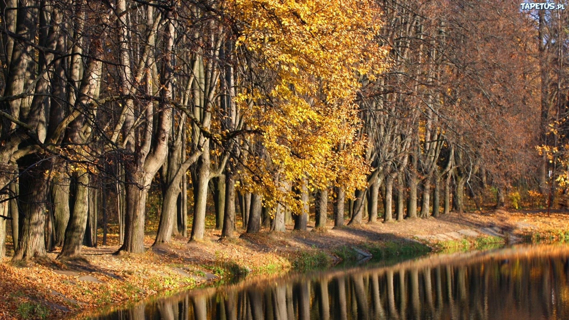 Осенний лиственный лес  № 3193579 бесплатно