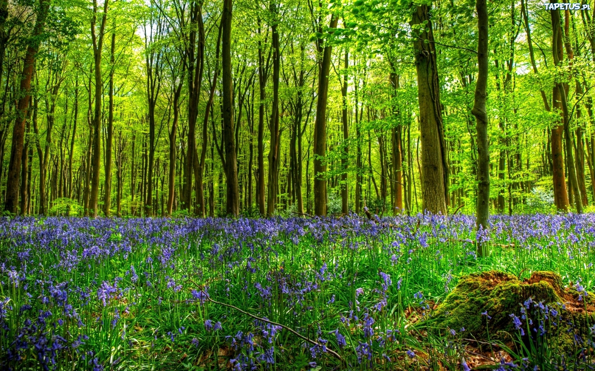 весной в лесу  № 113893 бесплатно