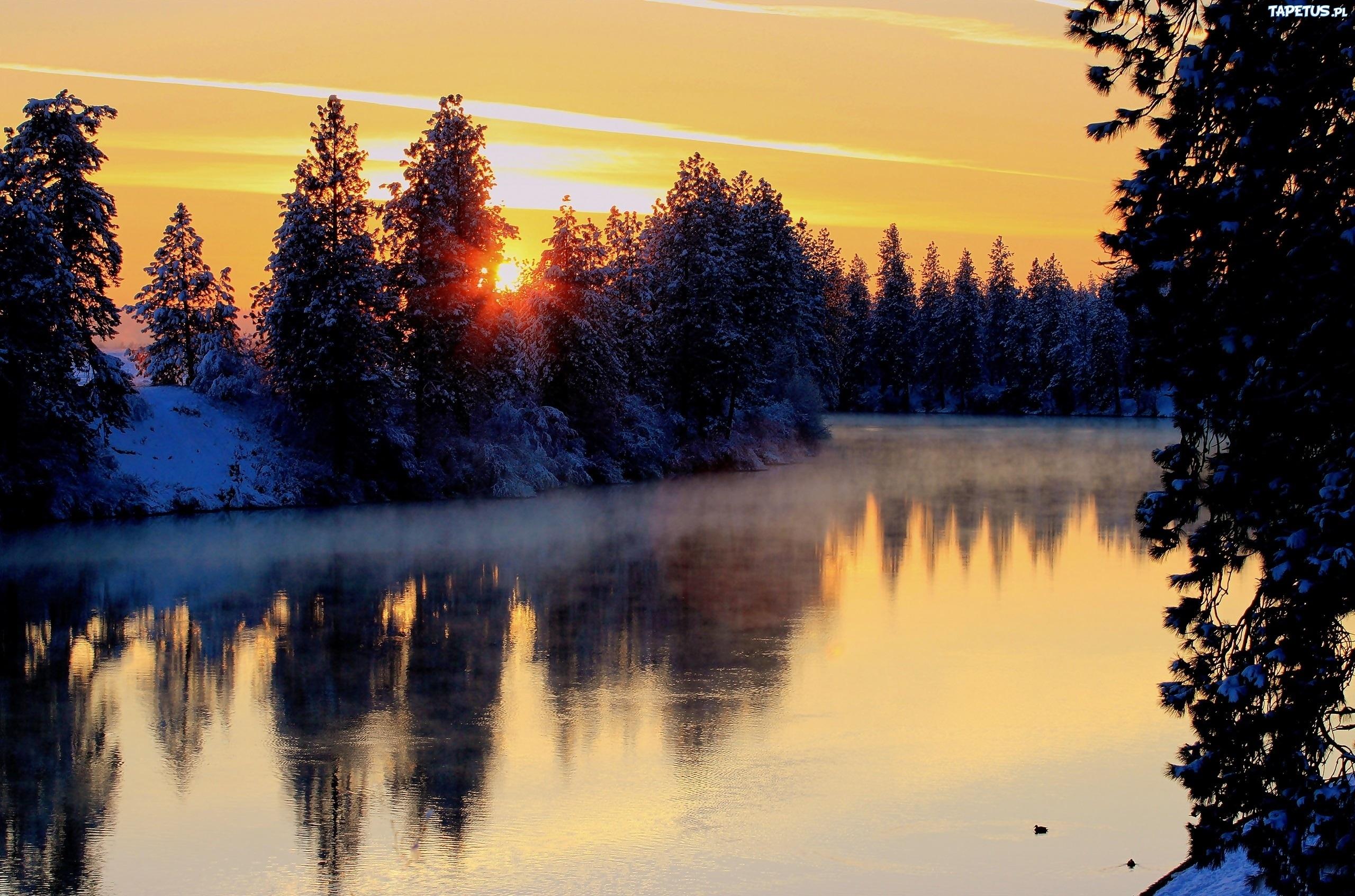 заснеженная растительность на закате  № 1027171 загрузить