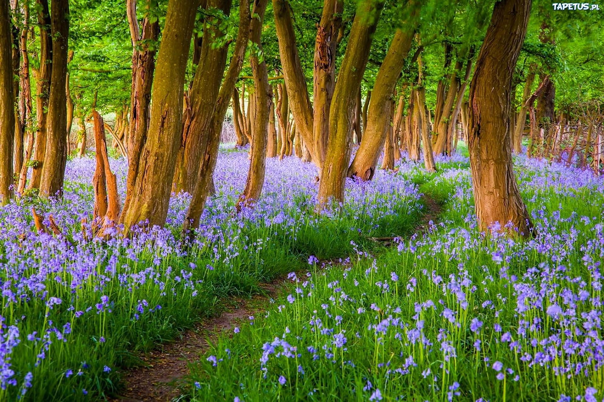 весной в лесу  № 113921 бесплатно