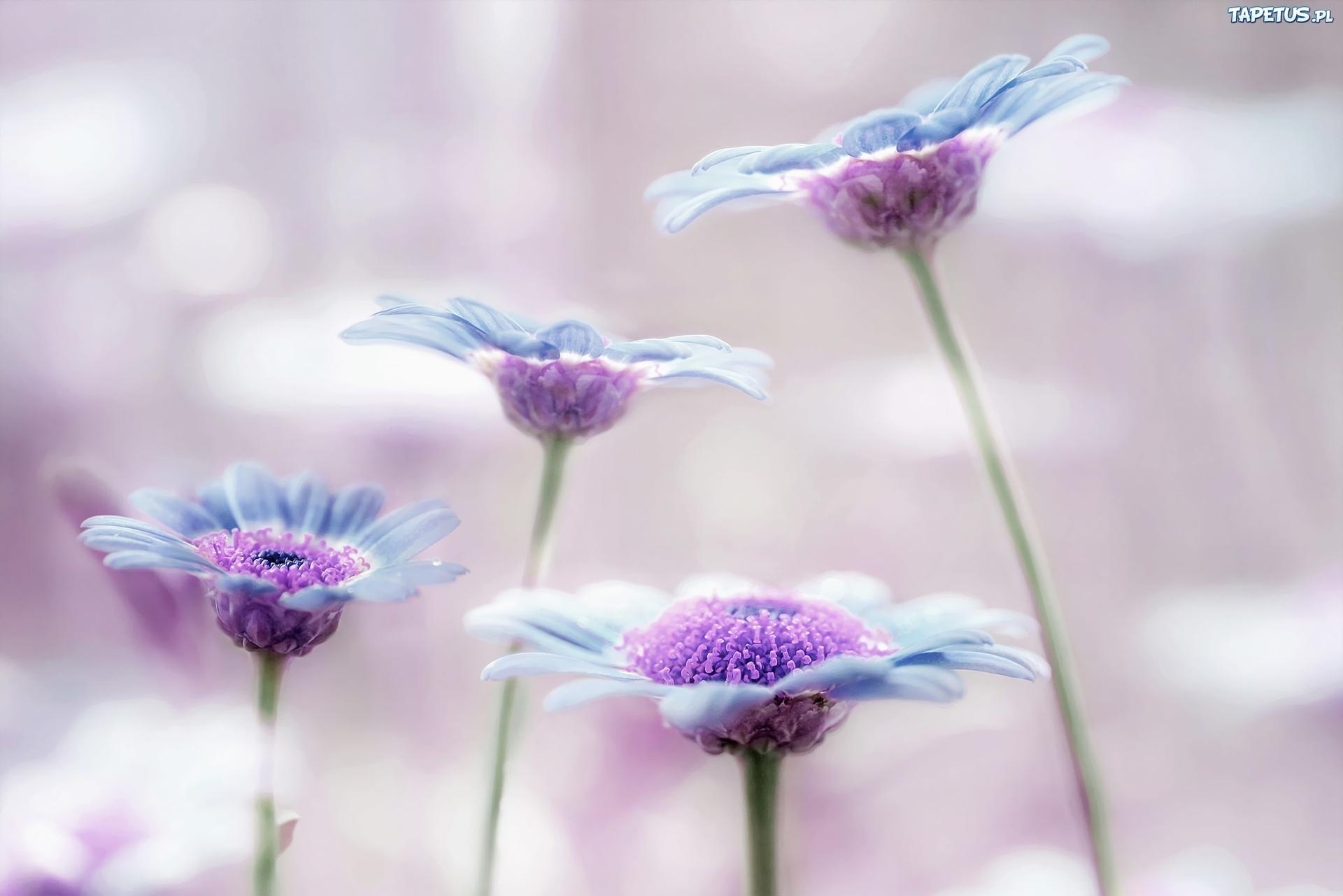 цветок фиолетовый  № 814223 бесплатно