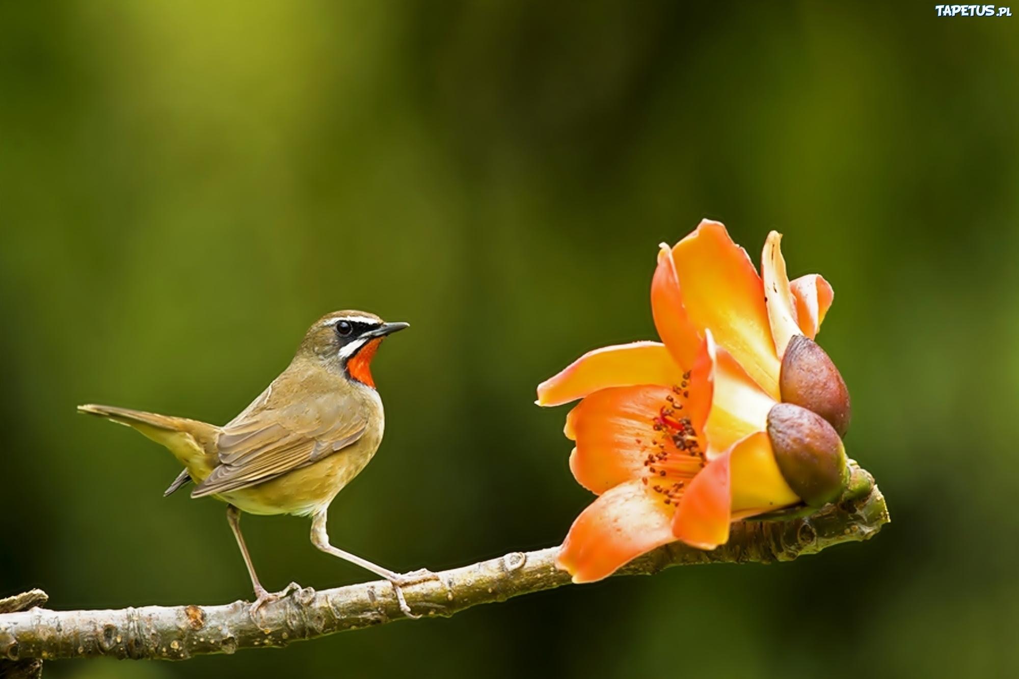 птица цветок  № 2034083 загрузить