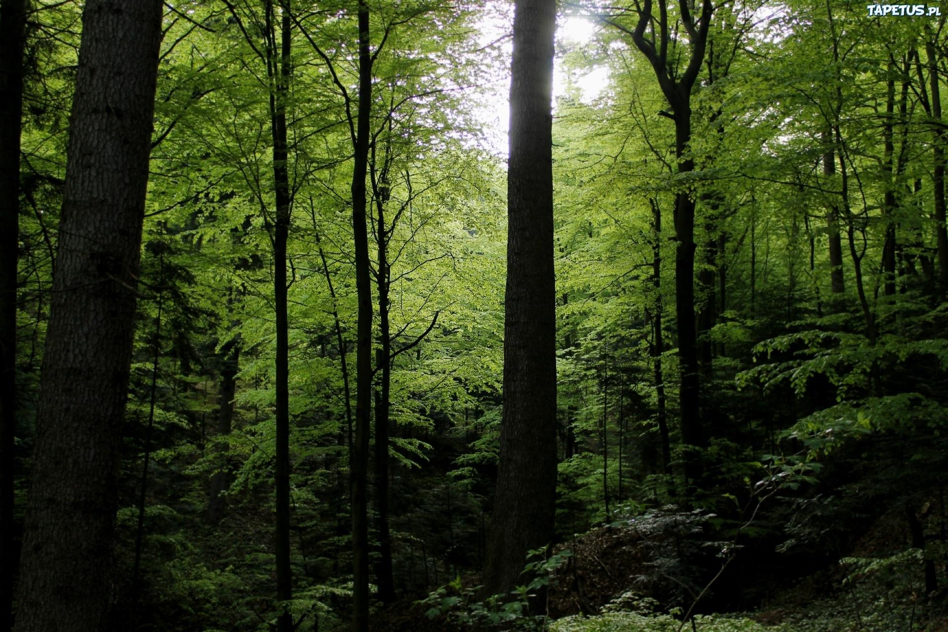 Tapety Wiosna - Tapety wiosenne - darmowe tapety na pulpit