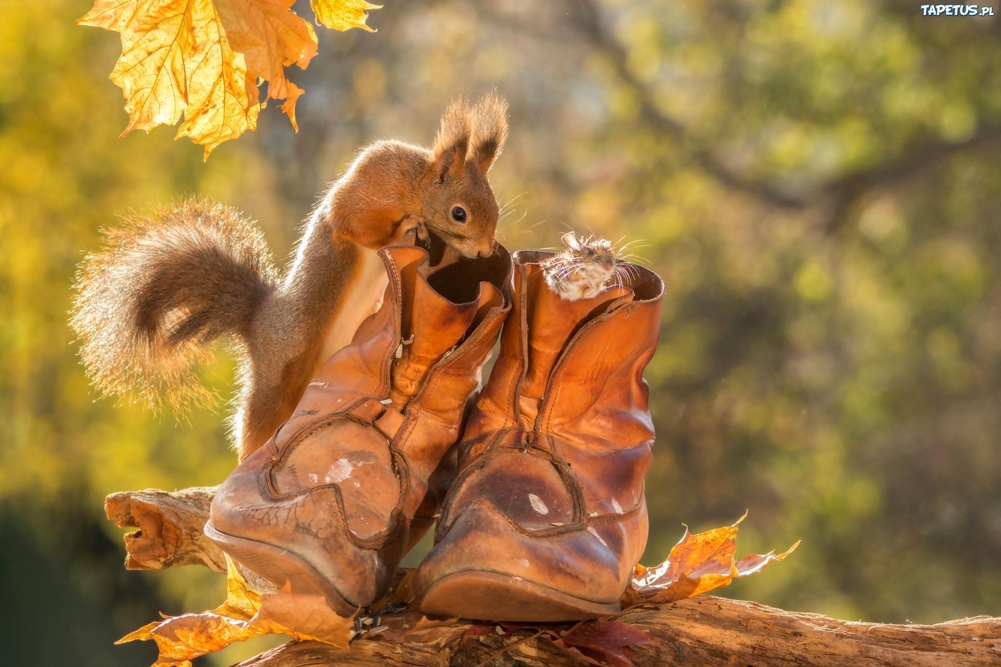 Белочка фото осенью 6