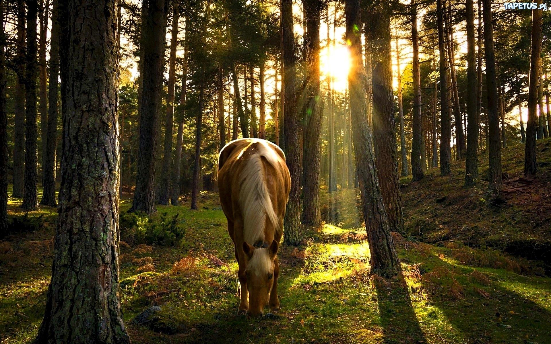 лошадь конь лес поляна  № 99092 загрузить