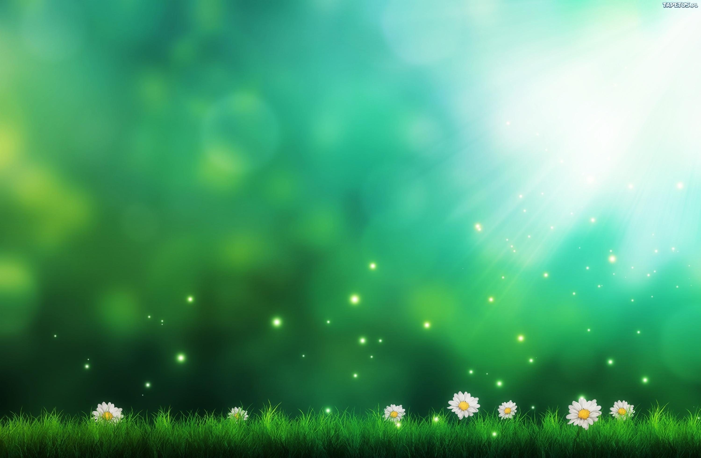 Tapeta Kwiaty, Trawa, Słońce