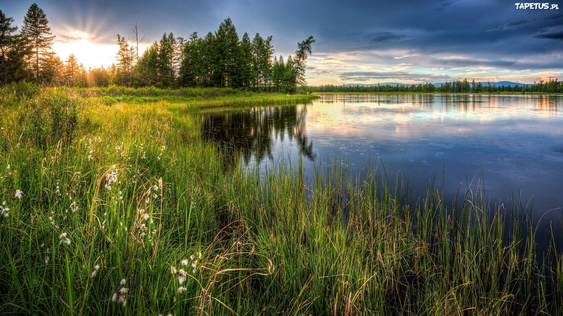Берег озера в траве  № 2482618 бесплатно