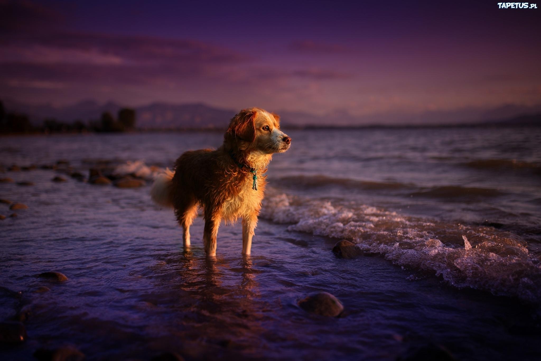 Собака на фоне заката  № 2038660 загрузить