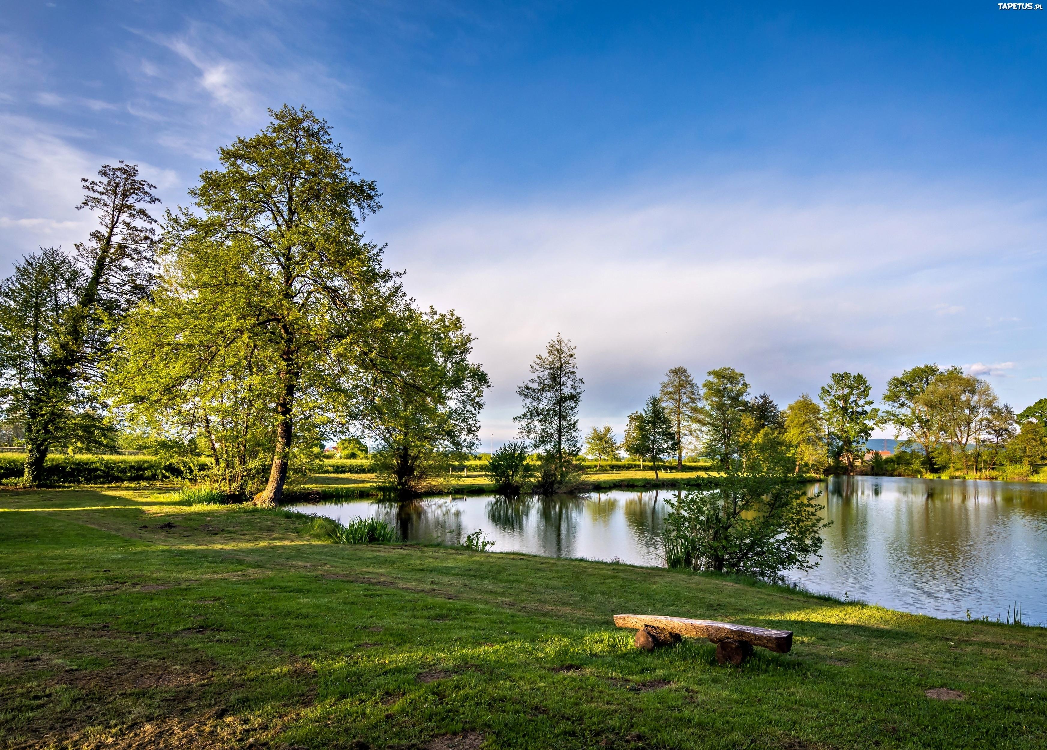 озеро деревья зелень лес лето  № 3246375 загрузить