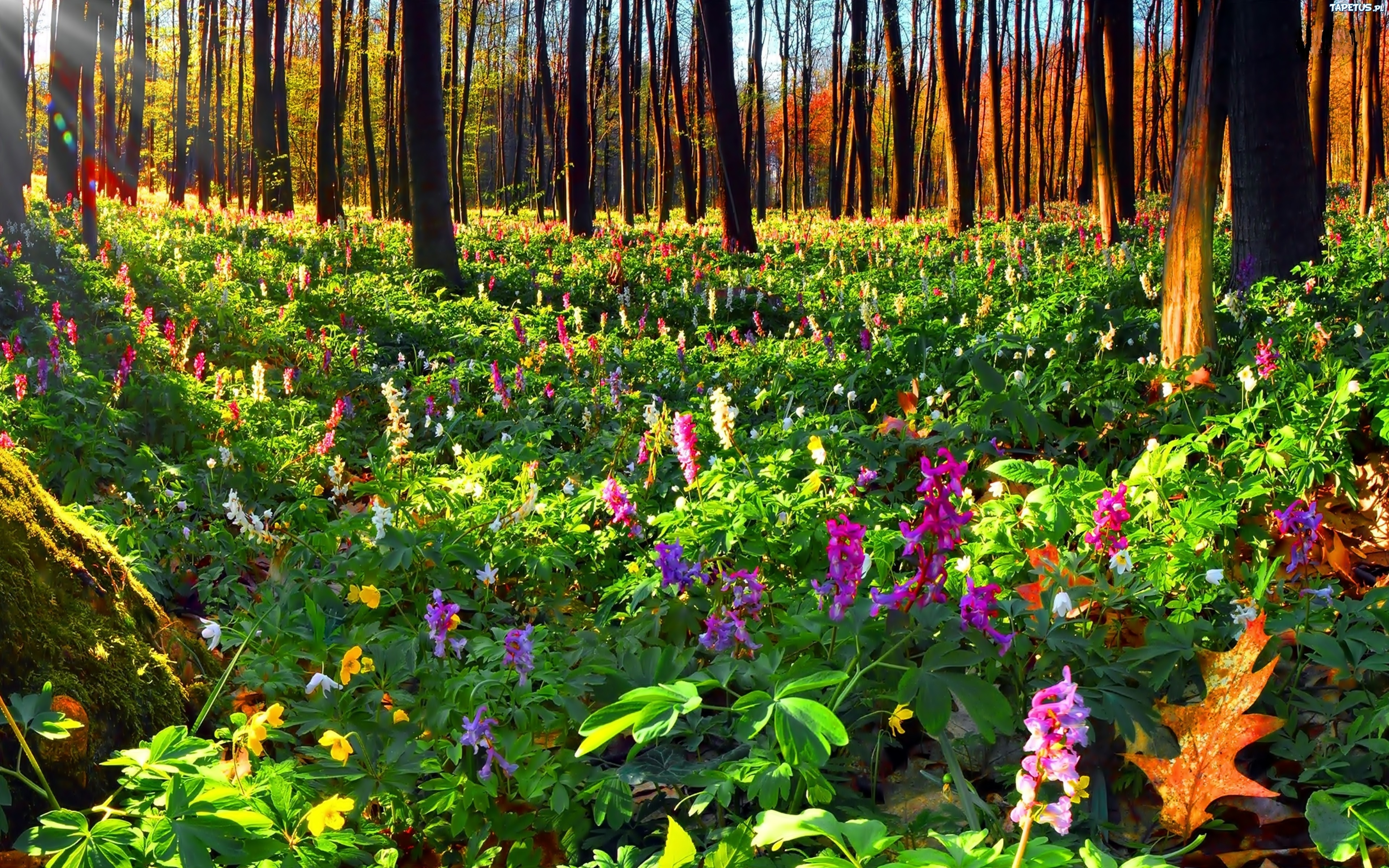 Цветы россии в лесу