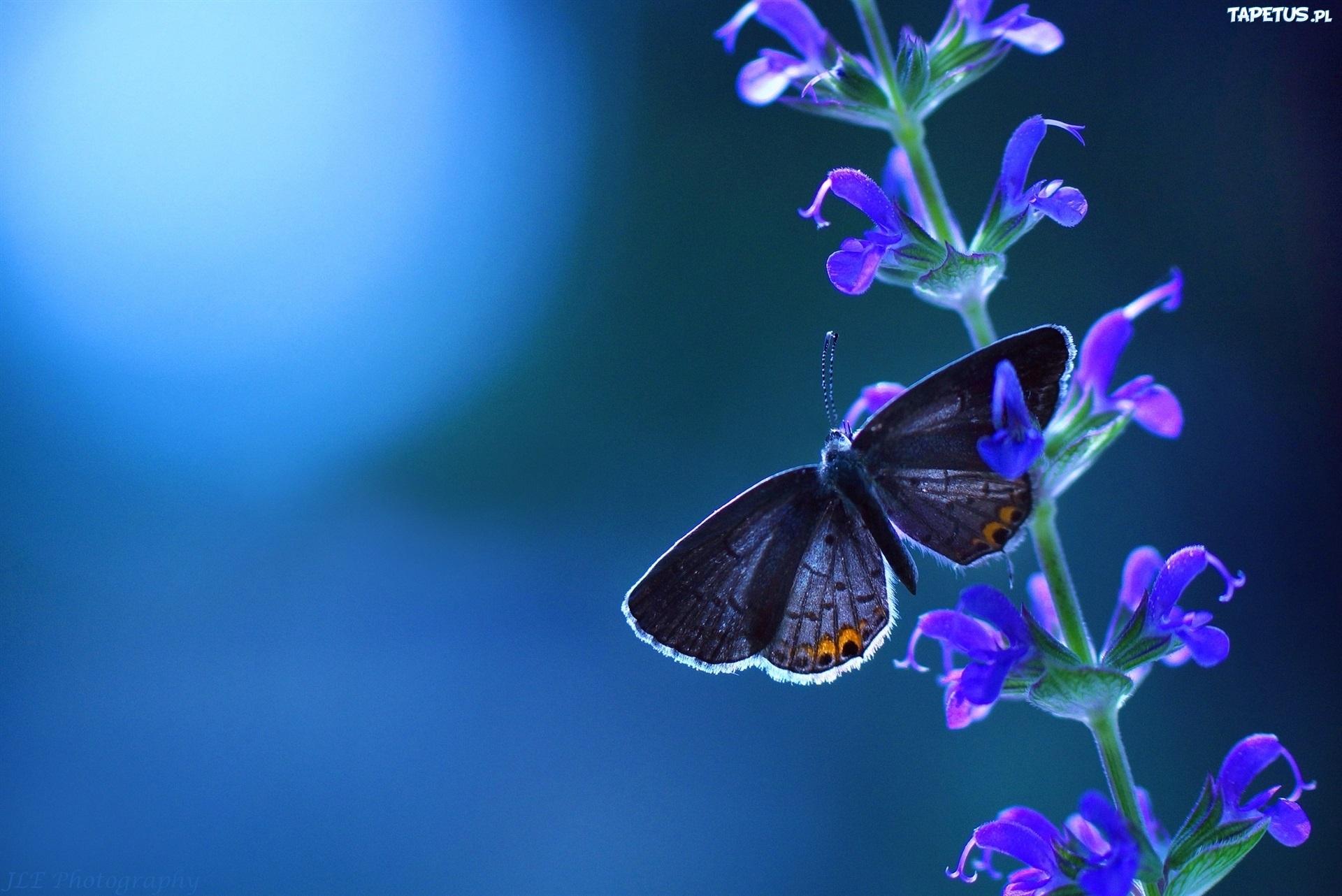 Бабочка1  № 2342678 бесплатно