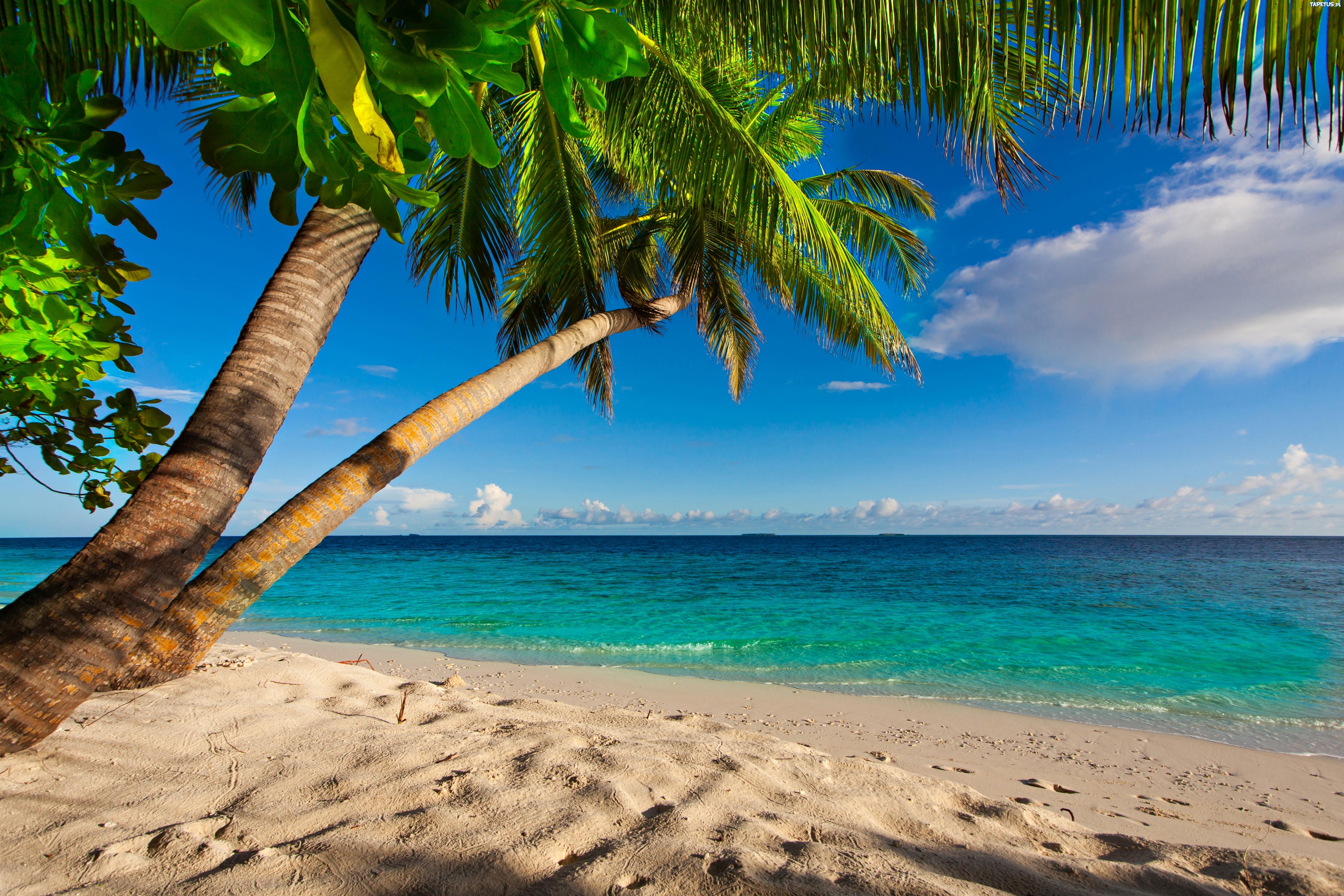 берег пальма море солнце пляж  № 3779886 без смс