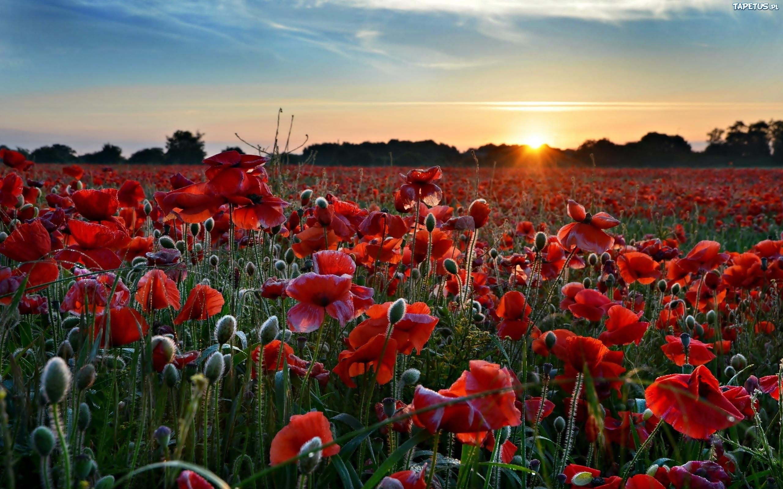 закат небо поляна цветы  № 3229917 бесплатно