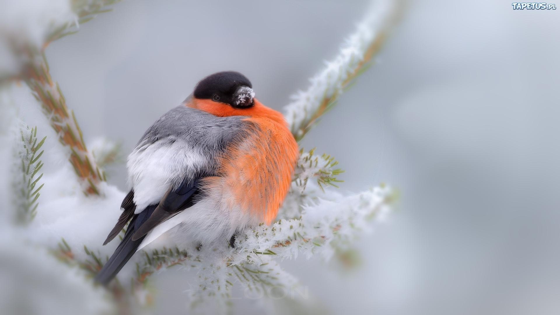 птички на снегу  № 101426 бесплатно