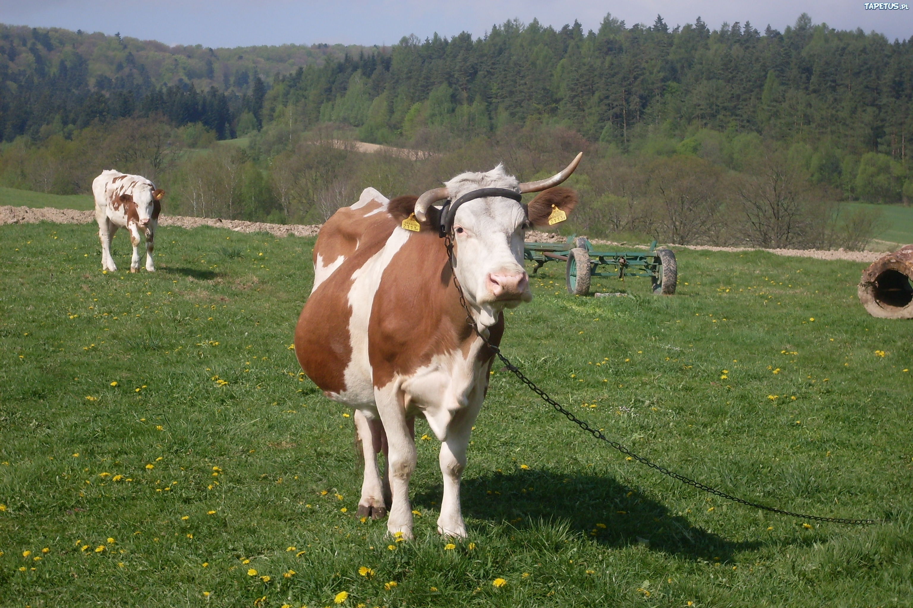 Prank Mechanisms: Kicking Goats and Sleeping Machines