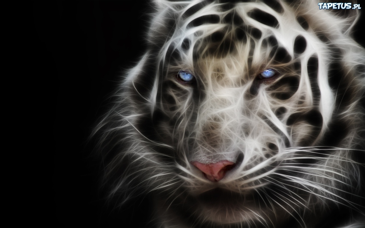 Source Tapetuspl Report White Tiger With Blue Eyes Wallpaper 3d
