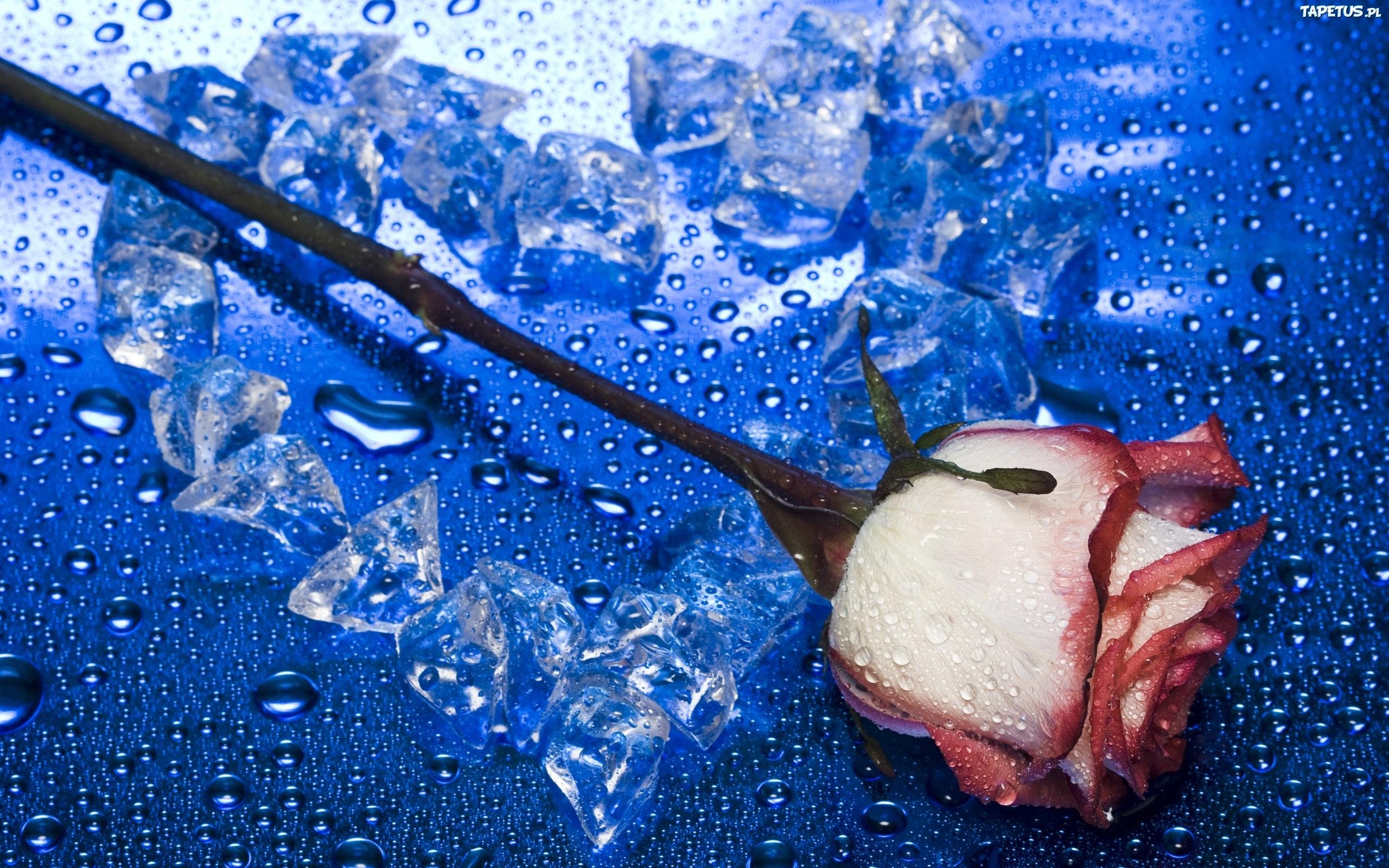 Два ледяных сердца  № 3490330 бесплатно