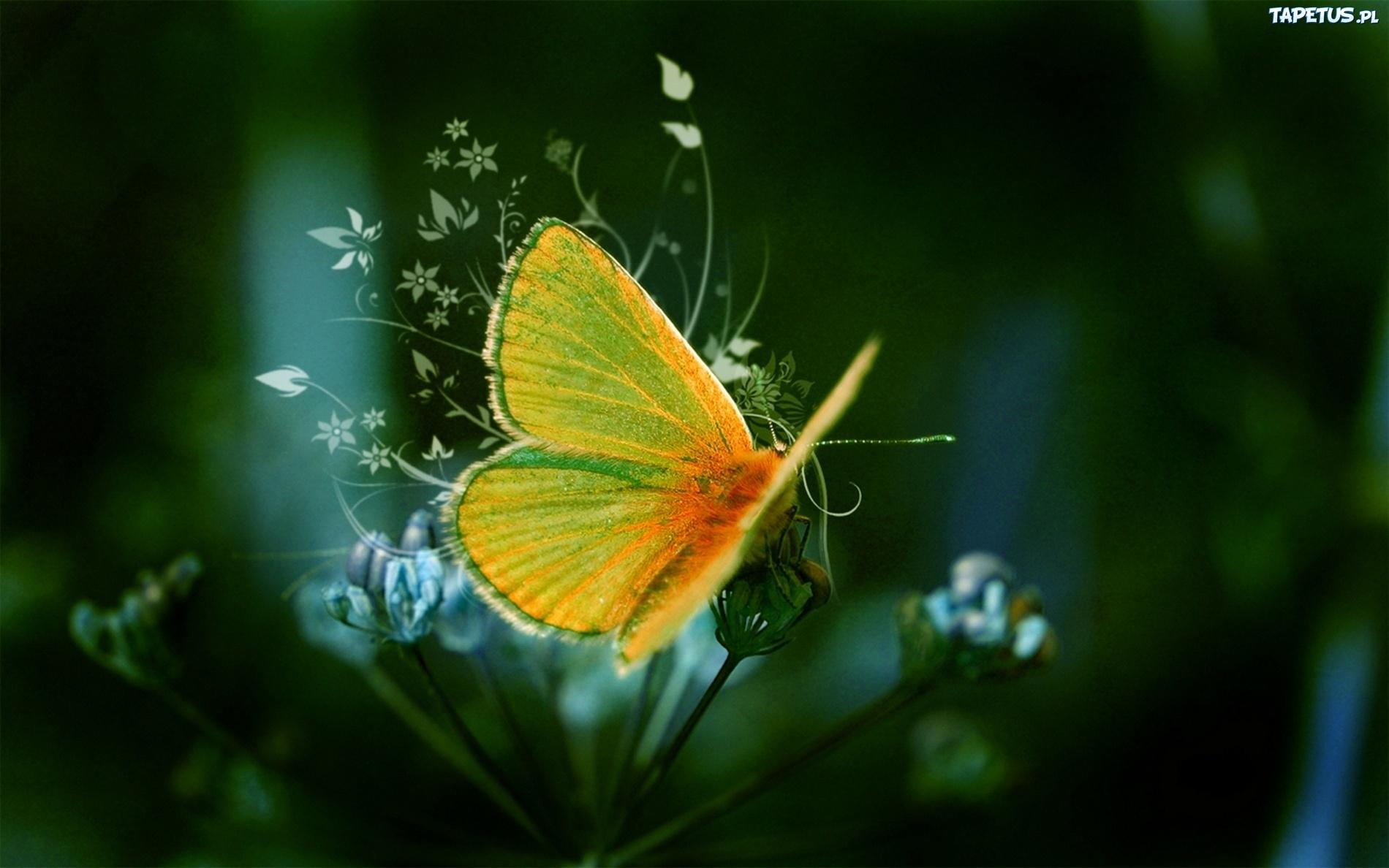 Kwiat Motyl Skrzyd A
