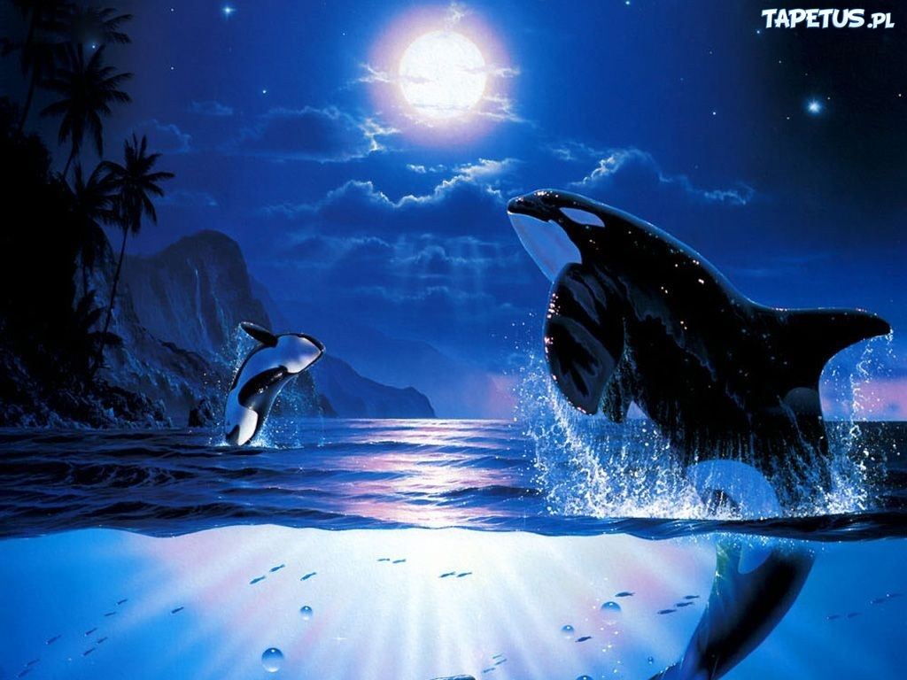 Cons Of Sea World further 185 together with Drawing Anime Eyes as well Blackfish The Movie Seaworld Doesnt Want You To See further Fat fuzzy penguin. on sad cartoon killer whale