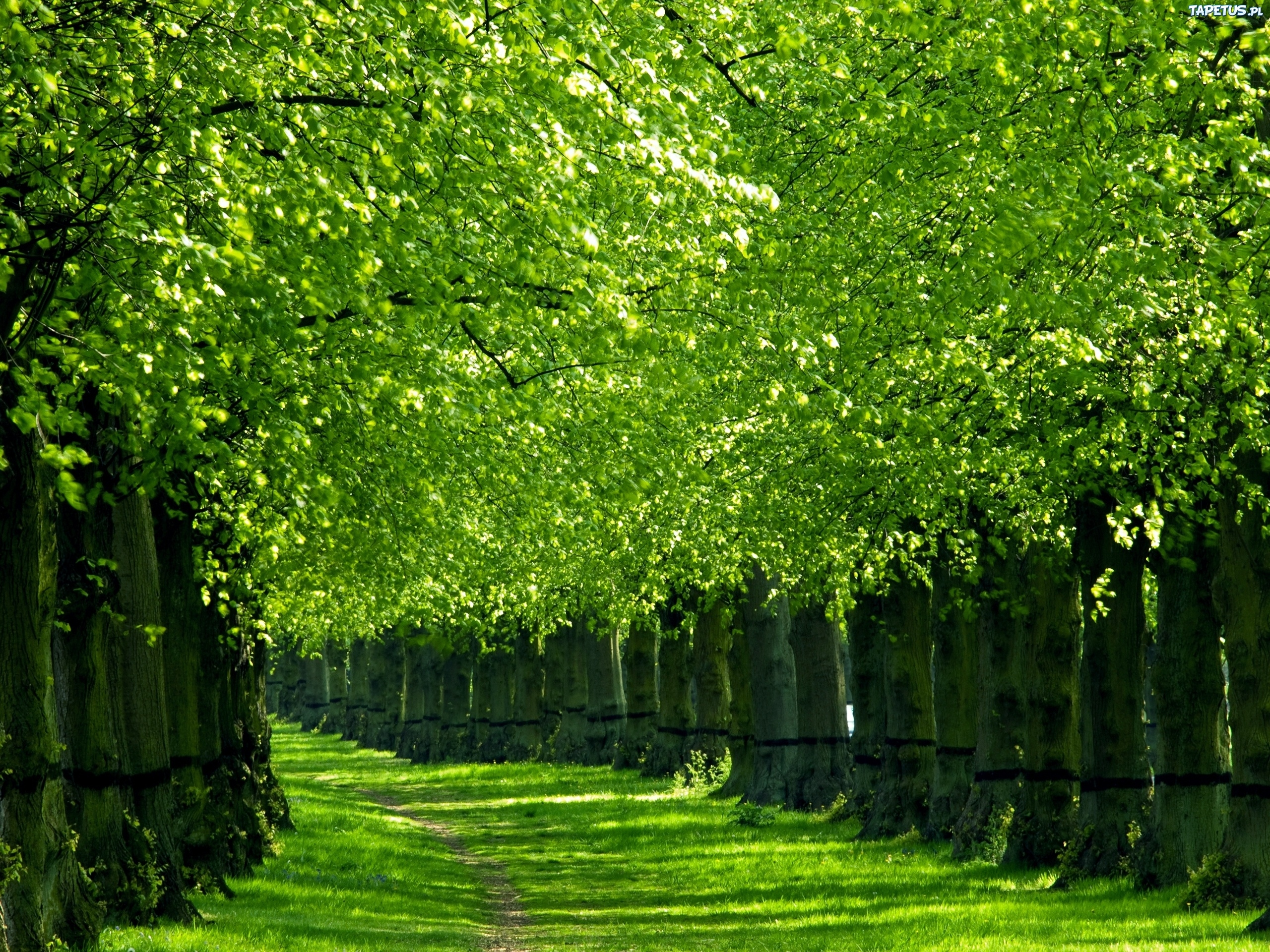 зелень лес деревья  № 1078764 бесплатно